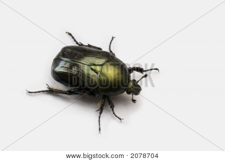 Scarab Beetle Isolated On White