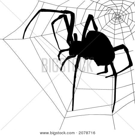Spooky Halloween Spider & Web Silhouette