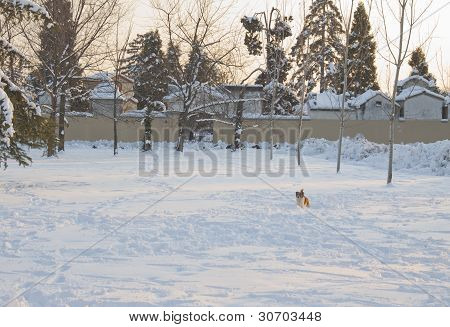 Dog Running In The Snow