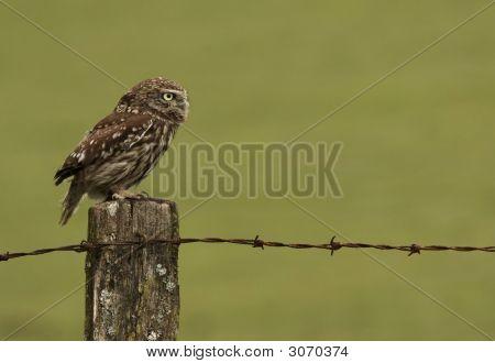 Alert Owl