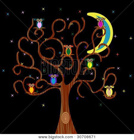 Cute Colored Owls Resting On A Tree Branches At Night