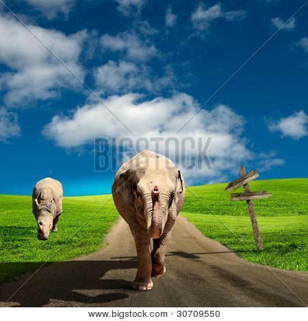 Picture of an elephant walking along the road under blue sky