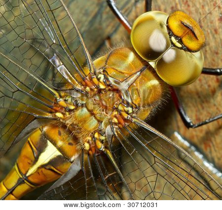 A Close-up Of A Dragonfly