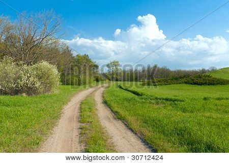 rural road in summer time