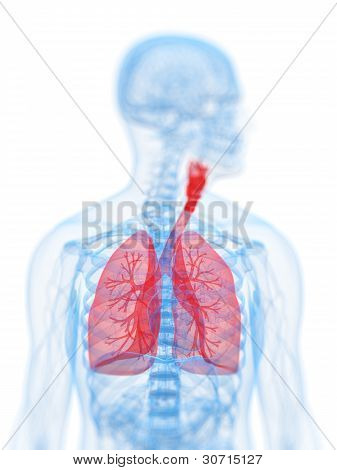 Human highlighted lung