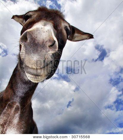 Comical Donkey