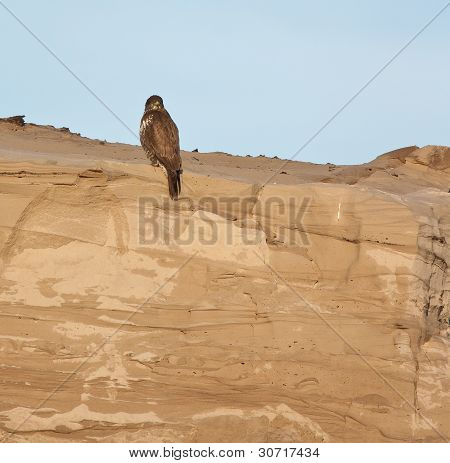 A Buzzard On A Sandy Hill
