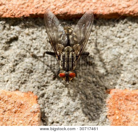 A Fly On A Brick Wall