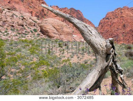 Desert Direct
