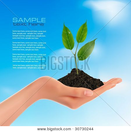 Young plant in hand.  Vector illustration