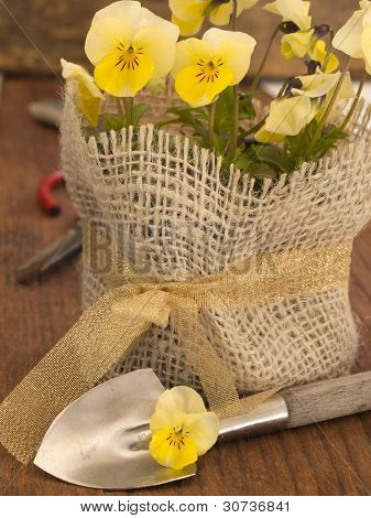 fresh viola flowers in a pot with  shovel on the wooden background