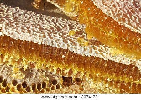 close up shot of honeycomb