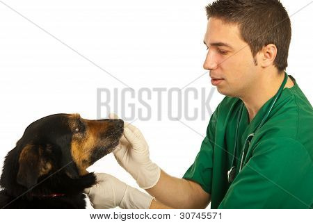 Vet Doctor With Dog