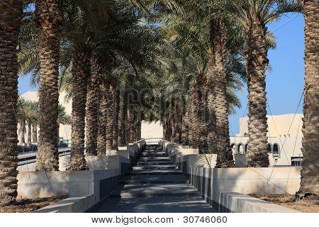 Callejón de árbol de Palma en Doha, Qatar