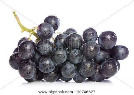 Ripe Blue Grapes
