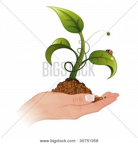 Woman Hand With The Sprout