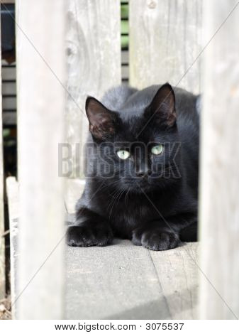 Black Cat On Stairs