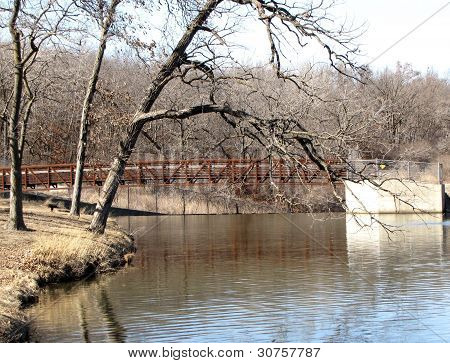 Barren tree branches hover over water