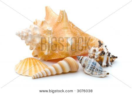 Collection Of Weathered Seashells Over White Background
