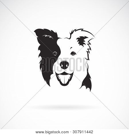 poster of Vector Of A Border Collie Dog On White Background. Pet. Animal. Dog Logo Or Icon. Easy Editable Laye