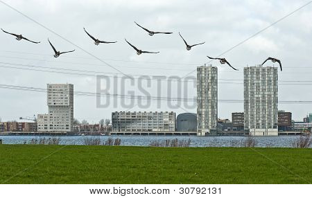 Birds flying to a city in winter