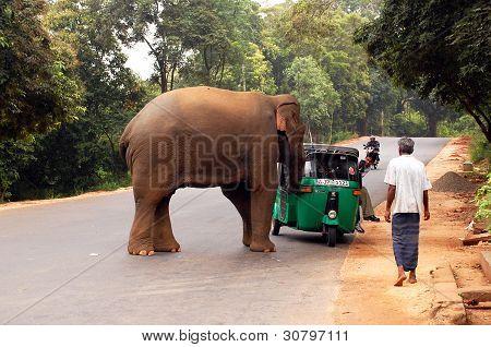 Wild Elephant's Attack