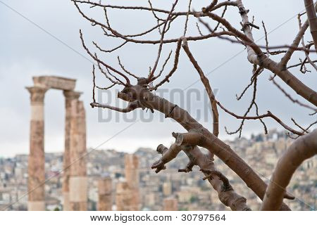 Naked Tree And Temple Of Hercules In Antique Citadel In Amman
