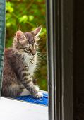 Little Grey Kitty Sitting At The Window poster