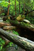 The Moss Covered Rocks And Fallen Trees An Ancient Woodland. Fallen Trees In The Woods Covered With  poster