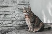Domestic Cat Sitting On The Street Near The Wall Of His House poster