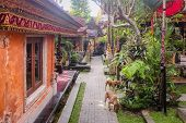 Two Stray Dogs Walking Inside The Festively Decorated Ubud Palace Or Puri Saren Agung. poster