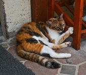 Beautiful Cat Lying On Floor At The Rural House poster