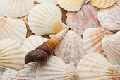 Brown Spiral Seashell Over Background Of Weathered Sea Shells poster