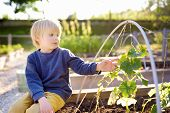 Little Child Is In Community Kitchen Garden. Raised Garden Beds With Plants In Vegetable Community G poster