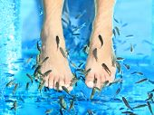 picture of fish skin  - Fish Spa pedicure Rufa Garra treatment - JPG