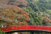 picture of minos  - Japanese fall colors in mino park - JPG