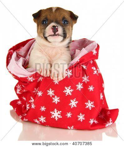 Cadelinha linda no ano novo saco isolado no branco
