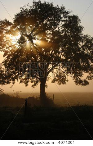 frühen Morgennebel