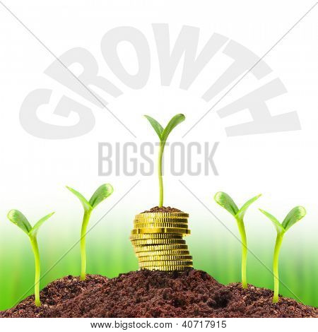 Money growth. Investment concept. Picture with easy removable text - space for your text or image.
