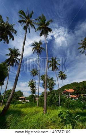 Tall palm trees in a garden and cloudy sky