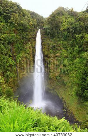 Hawaii Akaka Falls - Hawaiian waterfall on Big Island. Beautiful pristine nature landscape scene showing the famous waterfall, Akaka falls in lush scenery.