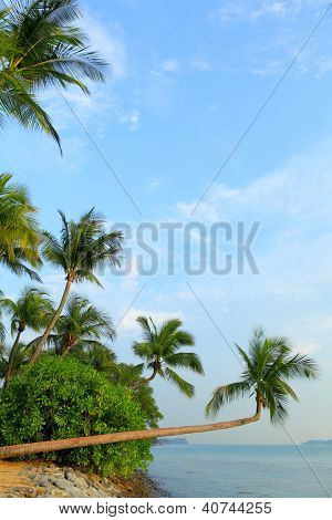 tree and landscape in sentosa, Singapore