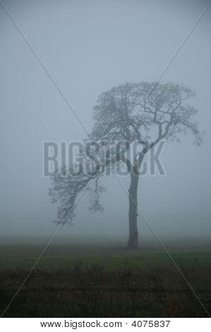 Tree In Misty Fog