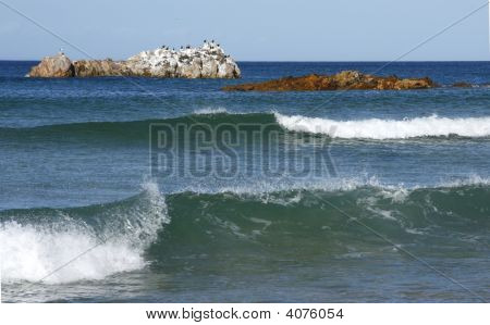 Bird Island And Waves