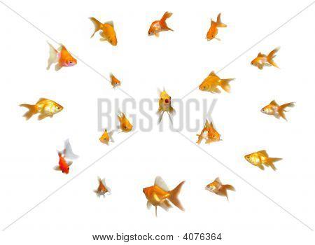 Goldfishes Set - Leadership