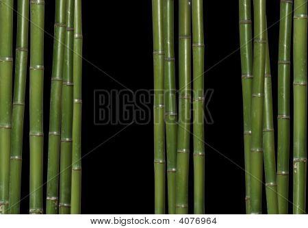 Hard Bamboo