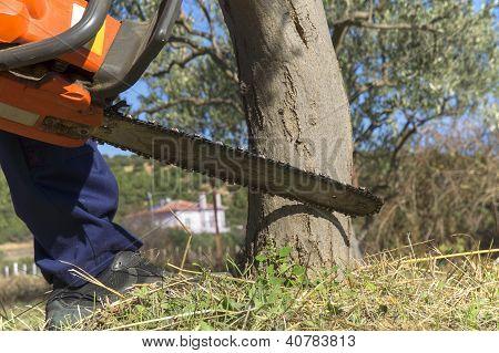 Chainsaw Cutting Wood