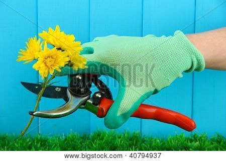 Secateurs with flower on fence background