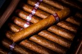 stock photo of cigar  - Close up of cigars in open humidor box - JPG