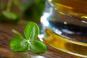 image of glass frog  - clover and beer - JPG